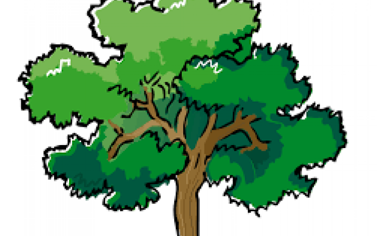 Shade Tree Commission TREE GIVEAWAY CONTEST